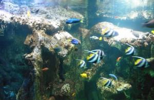 Les résidents guidélois visitent l'aquarium de Vannes