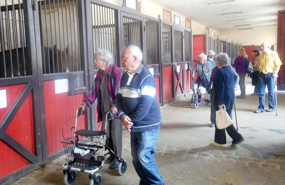 Spectacle et visite au haras national d'Hennebont