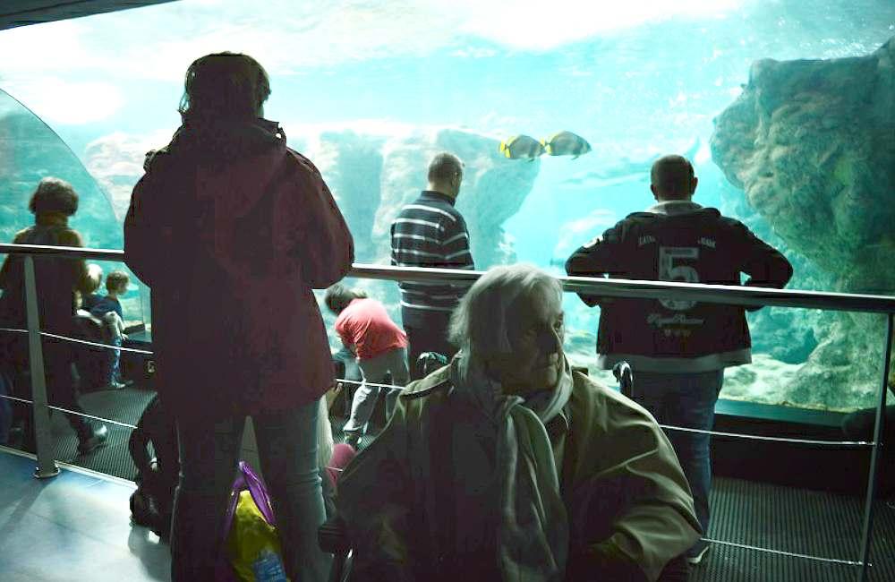Sortie à Océanopolis pour les résidents du Petit Jardin