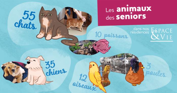 infographie animaux de compagnie chez Espace & Vie