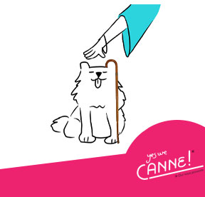 Yes we Canne animaux
